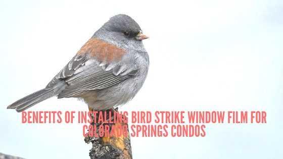 Benefits of Installing Bird Strike Window Film for Colorado Springs Condos