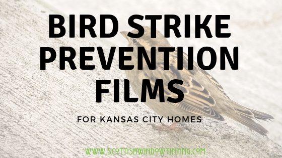 Bird Strike Prevention Window Film Solutions for Kansas City Homes