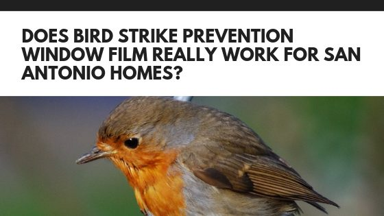 Does Bird Strike Prevention Window Film Really Work for San Antonio Homes?
