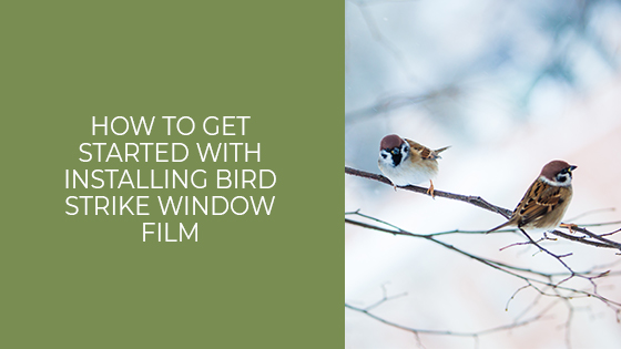 How to Get Started Installing Residential Bird Strike Window Film for San Antonio Homes