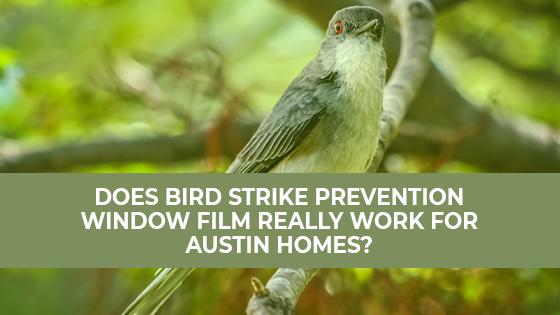 Does Bird Strike Prevention Window Film Really Work for Austin Homes?
