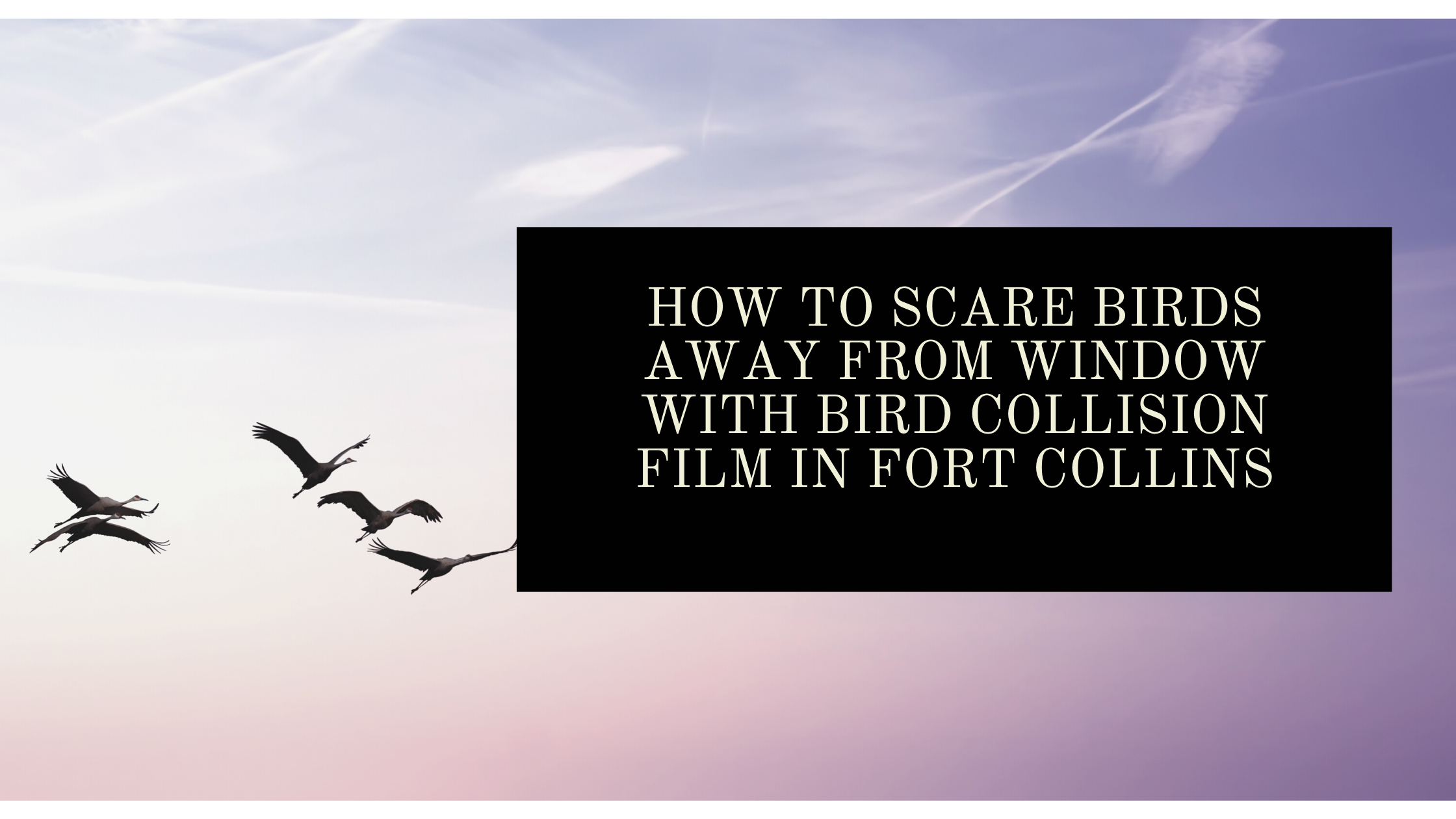 How to Scare Birds Away from Window with Bird Collision Film in Fort Collins