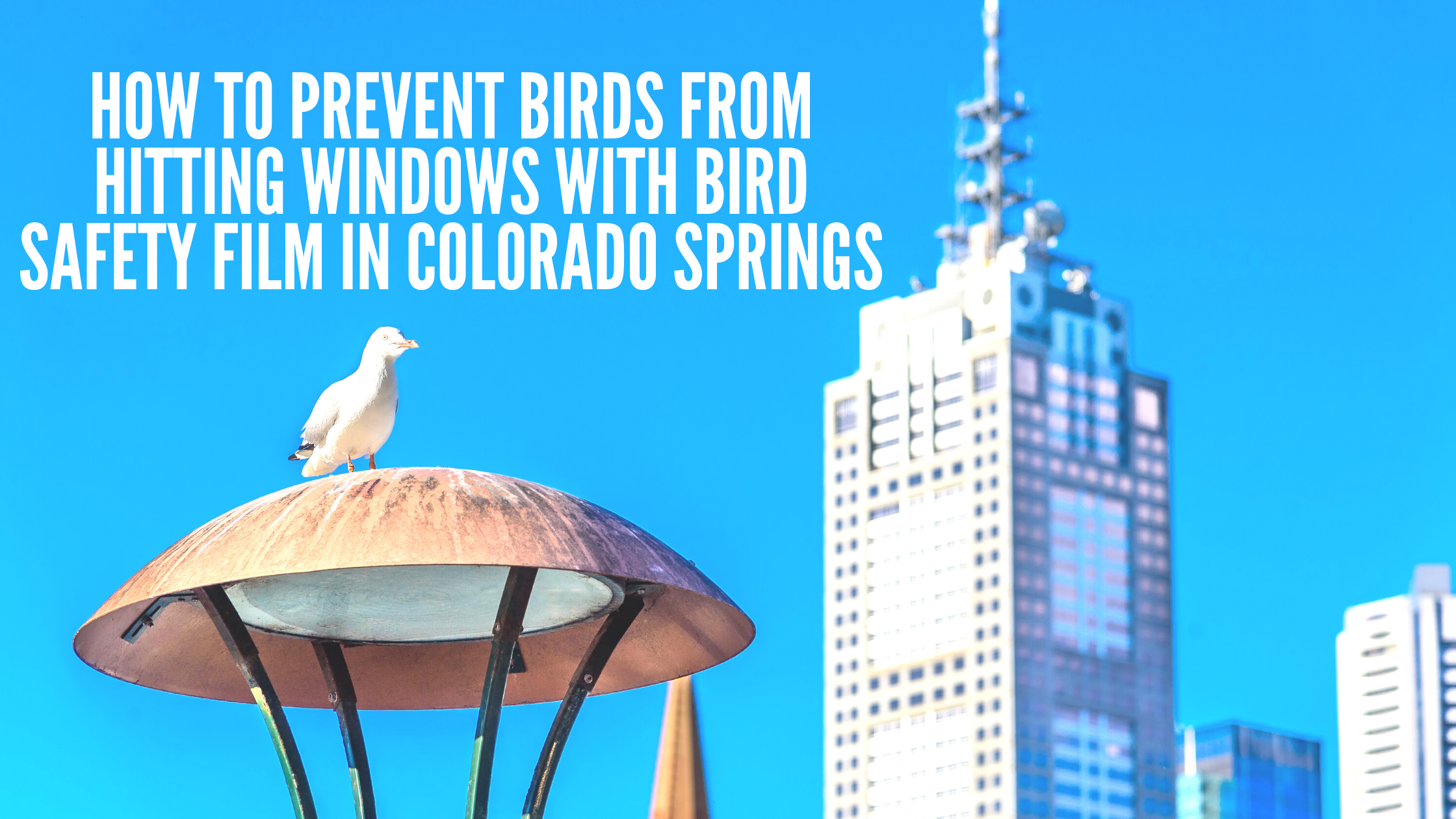 How to Prevent Birds from Hitting Windows with Bird Safety Film in Colorado Springs