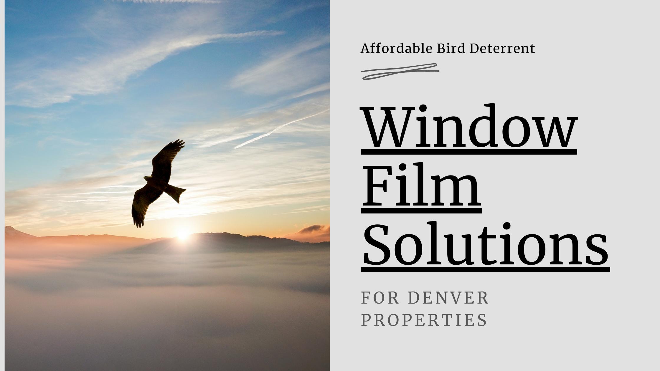 Affordable Bird Deterrent Window Film Solutions for Denver Properties