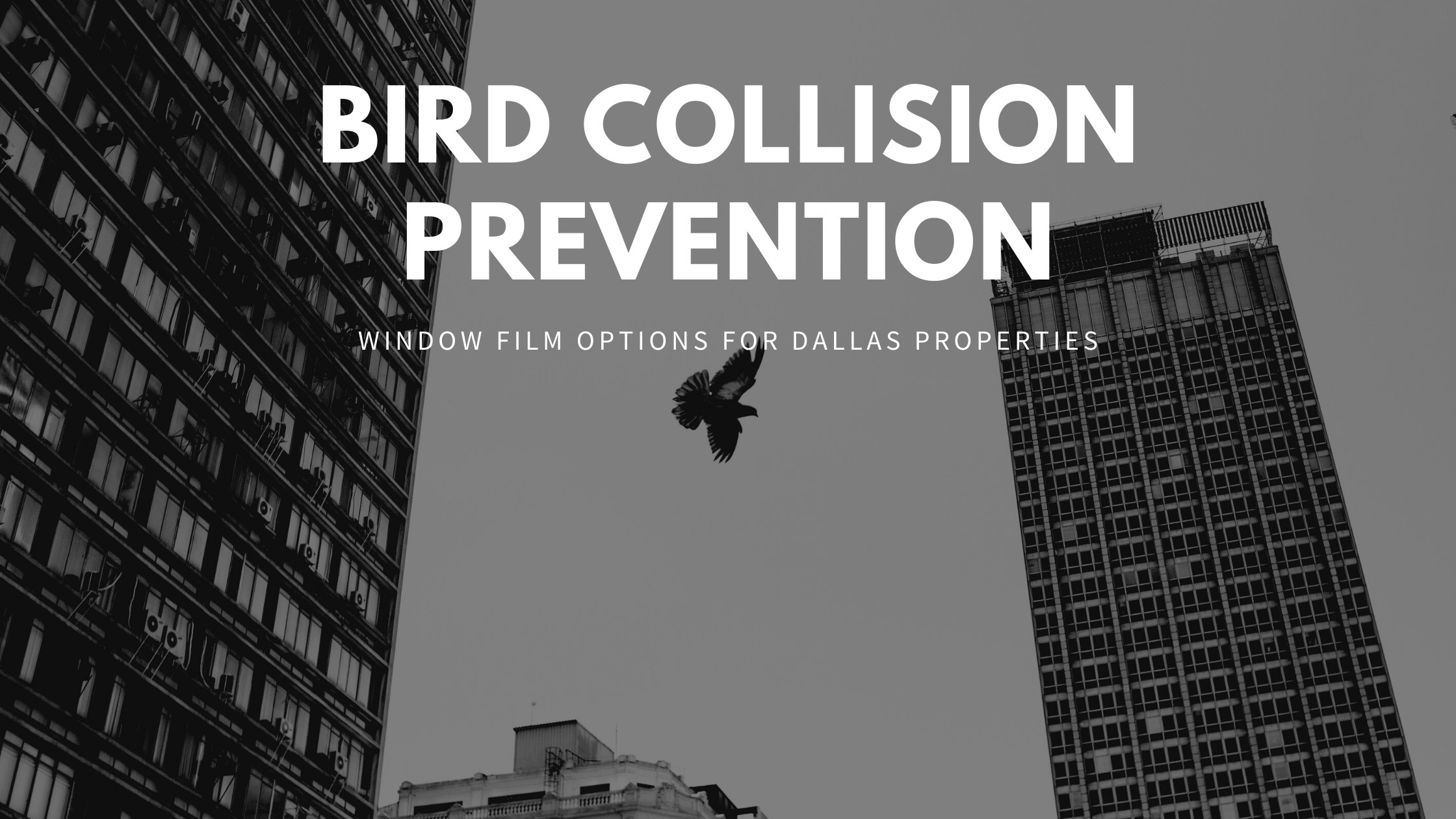 Bird Collision Prevention Window Film Options for Dallas Properties