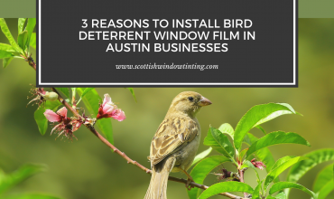 3 Reasons to Install Bird Deterrent Window Film in Austin Businesses