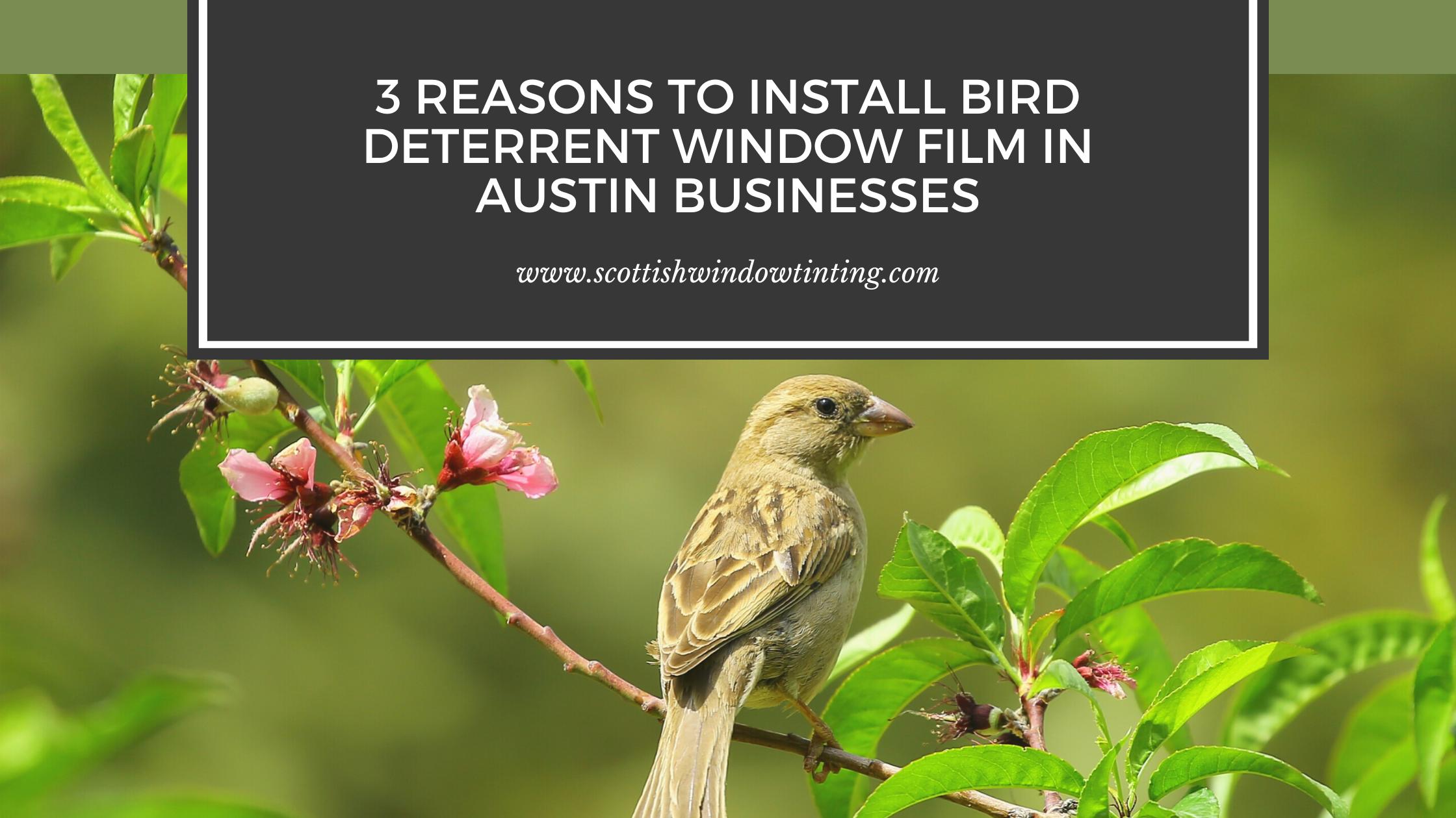 3 Reasons to Install Bird Deterrent Window Film in Austin Businesses