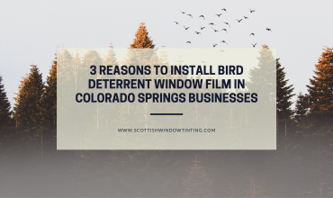 3 Reasons to Install Bird Deterrent Window Film in Colorado Springs Businesses