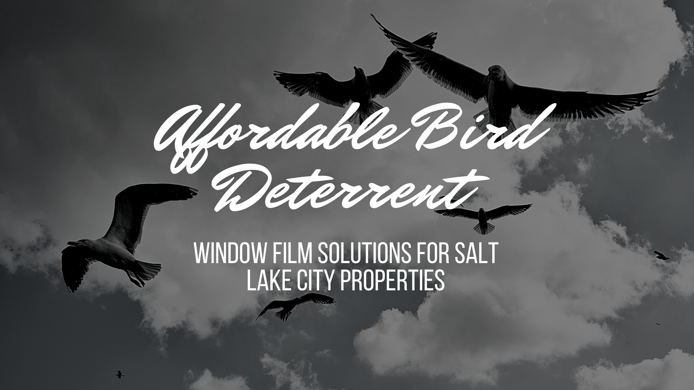 Affordable Bird Deterrent Window Film Solutions for Salt Lake City Properties