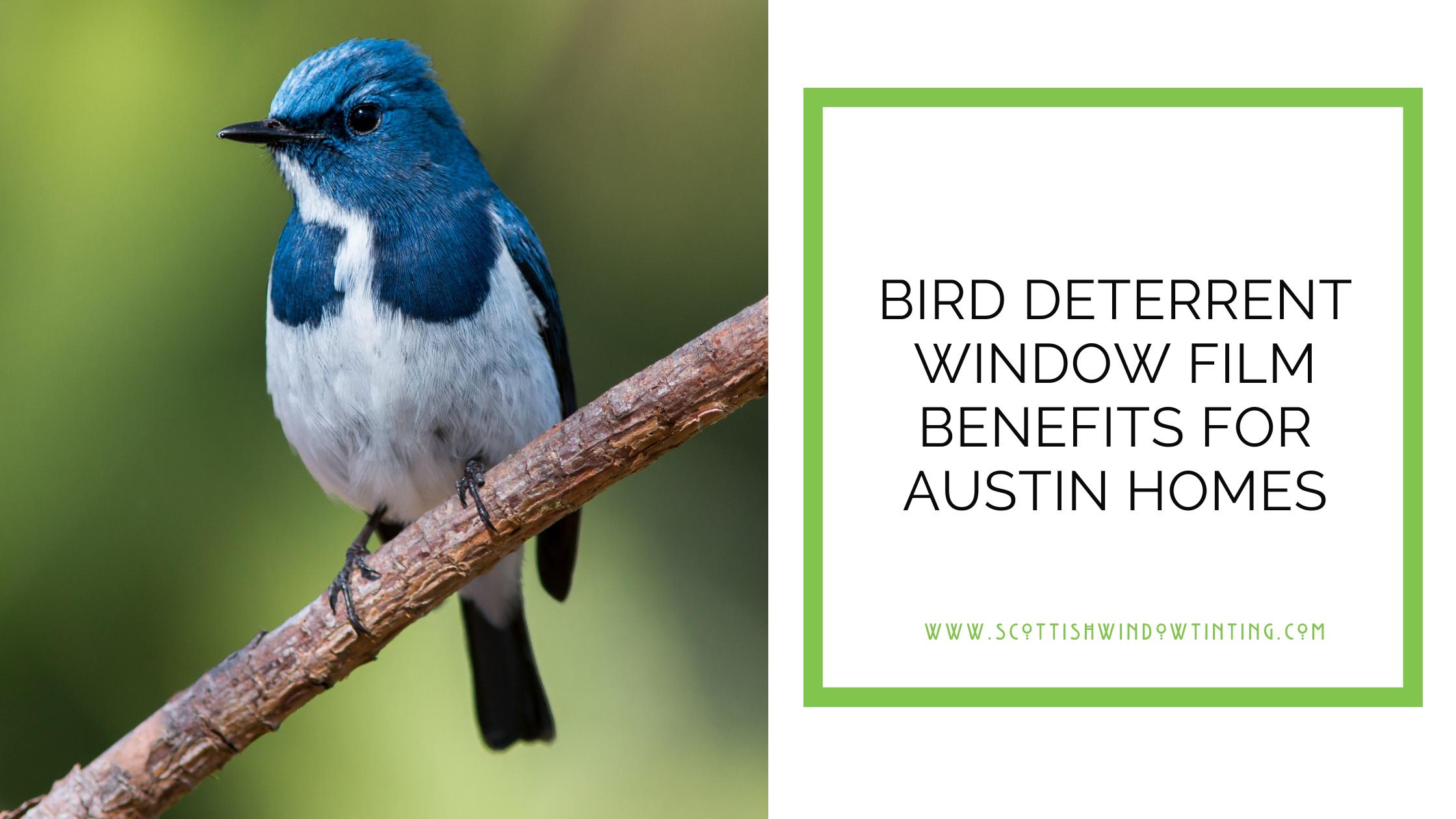 Bird Deterrent Window Film Benefits for Austin Homes