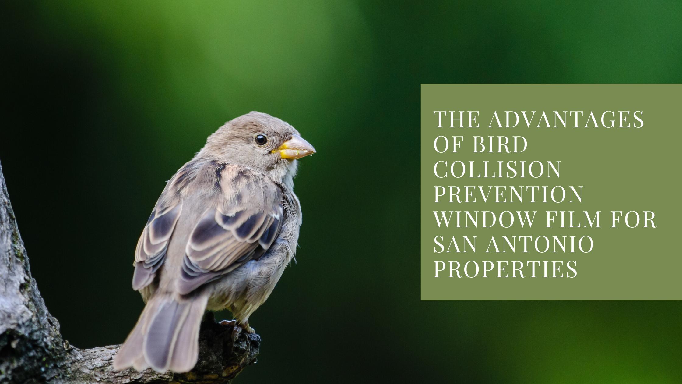 The Advantages of Bird Collision Prevention Window Film for San Antonio Properties