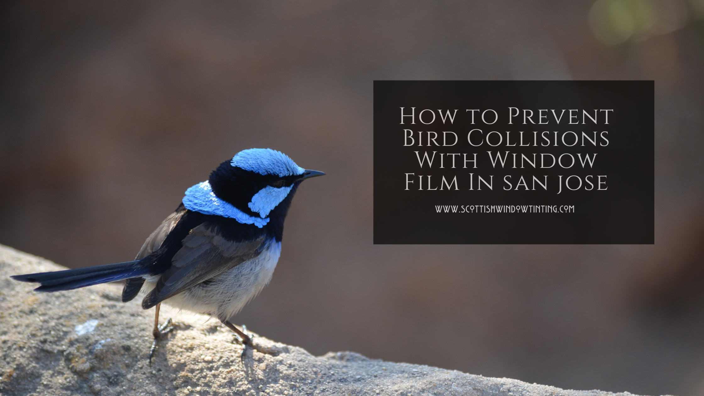 How to Prevent Bird Collisions With Window Film In Colorado Springs
