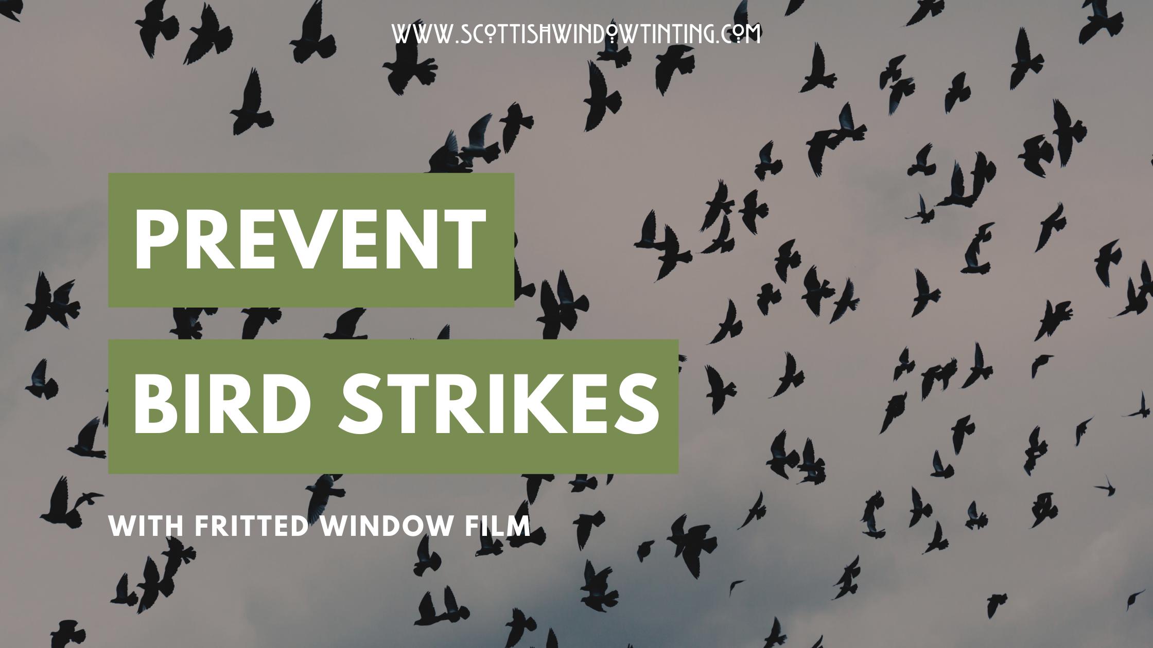 Stop Bird Collisions In Salt Lake City Properties With Window Film