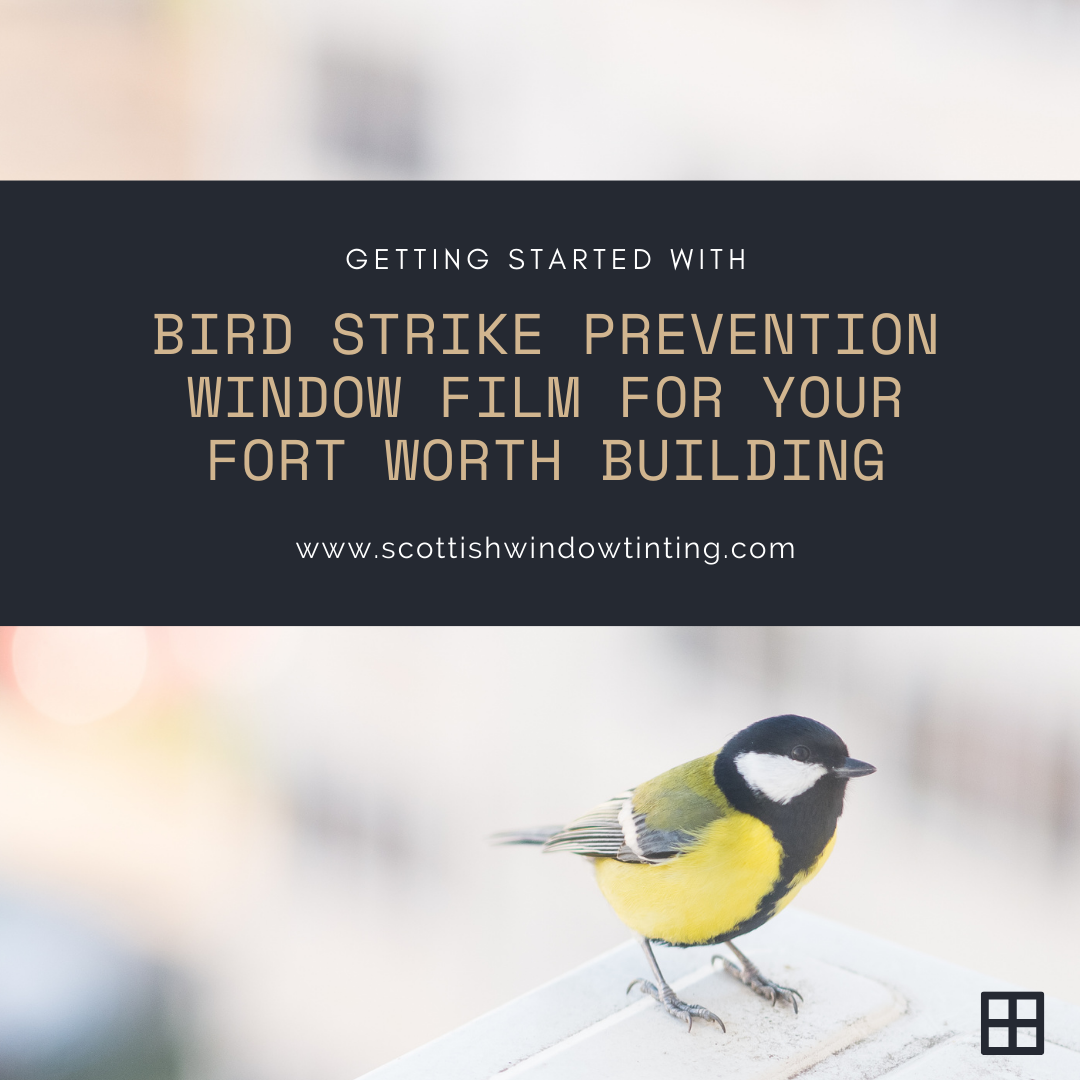 Getting Started with Bird Strike Prevention Window Film for your Fort Worth Building